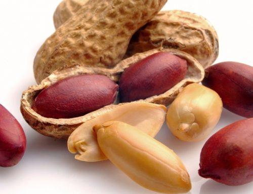 Amendoins poderão aumentar o risco de metástases