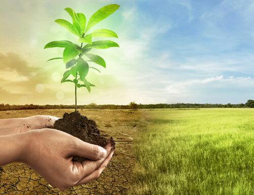 Uma dieta de base vegetal pode evitar tantas emissões de CO2 como 9 a 16 anos de utilização de combustíveis fósseis.